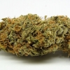 amnisia-haze-strain-review-05