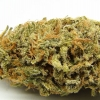 amnisia-haze-strain-review-08