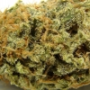amnisia-haze-strain-review-11