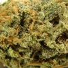 amnisia-haze-strain-review-12