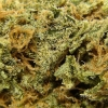 amnisia-haze-strain-review-22