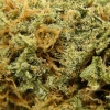 amnisia-haze-strain-review-23
