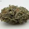 blackberry-kush-strain-review-01