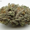 blackberry-kush-strain-review-02