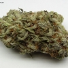 blackberry-kush-strain-review-05