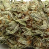 blackberry-kush-strain-review-07