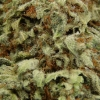 blackberry-kush-strain-review-09