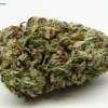 blackberry-kush-strain-review-10