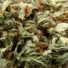 blackberry-kush-strain-review-12