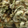 blackberry-kush-strain-review-13