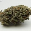blackberry-kush-strain-review-14