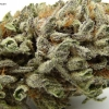blackberry-kush-strain-review-15
