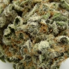 blackberry-kush-strain-review-17