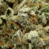 blackberry-kush-strain-review-18