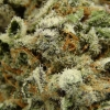 blackberry-kush-strain-review-19