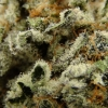 blackberry-kush-strain-review-20