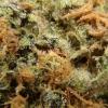 purple-kush-strain-review-05