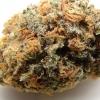 purple-kush-strain-review-08