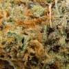 purple-kush-strain-review-17
