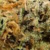 purple-kush-strain-review-20