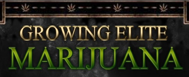 Growing Elite Marijuana – Book Review