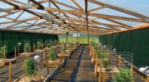 Grow Like a Pro – Big Sluggers Outdoor Cannabis Garden