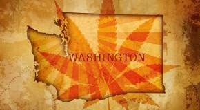 Washington's Cannabis Dispensaries – Muddy Waters
