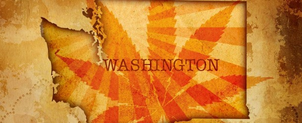 Washington's Cannabis Dispensaries – Muddy Waters