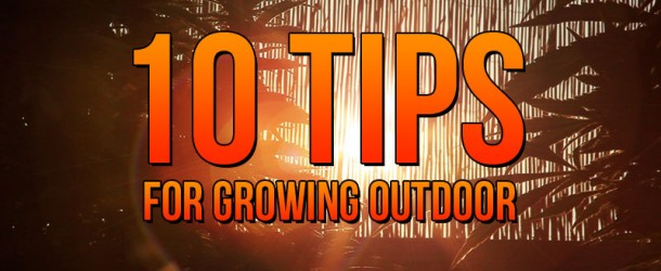 10 Tips for Growing Outdoor