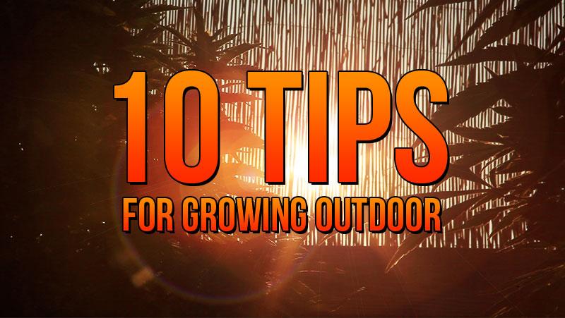 Marijuana Growers HQ 10 Tips for Growing Outdoor - Marijuana Growers HQ