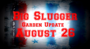 Monster Plants: Big Sluggers 2012 Outdoor Update