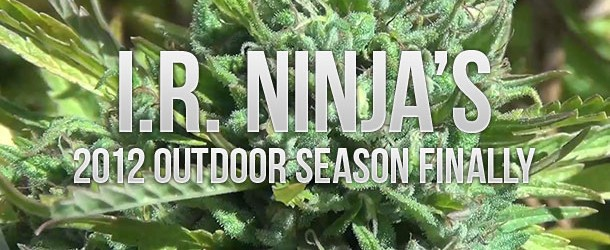 IR Ninja's 2012 Outdoor Grow