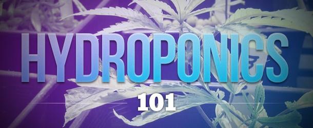 Hydroponics 101