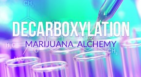 Decarboxylation: Marijuana Alchemy