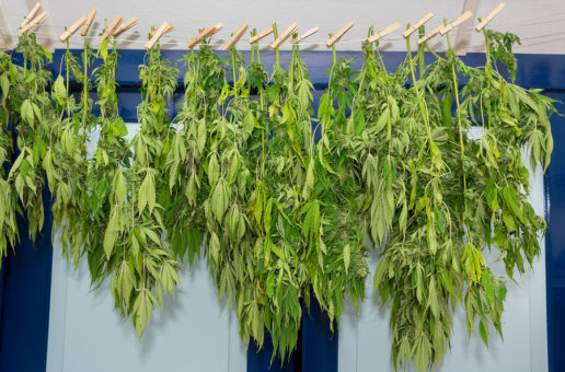 Drying Cannabis with Dehumidifiers