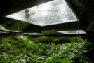 Pounds Per Light – Calculating Grow Room Yield