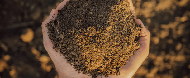 Best Soil Mix For Cannabis Seeds and Starts