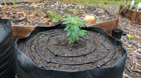 Drip Irrigation Kits for Cannabis Gardens